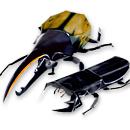 昆虫の入り口画像